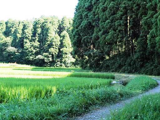 田んぼ道.JPG