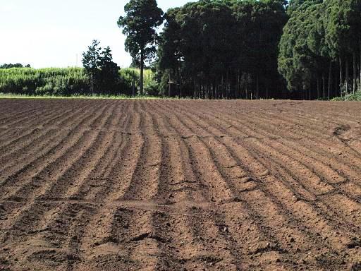 畑の土.JPG