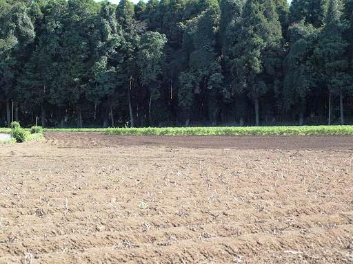 畑と森.JPG