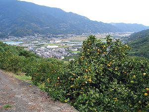 鶴林寺登山道2.jpg