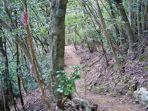 鶴林寺から下り道.jpg