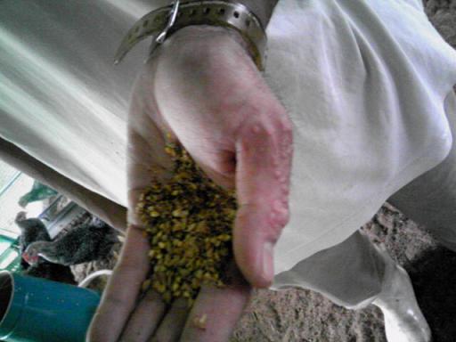 米の餌.JPG