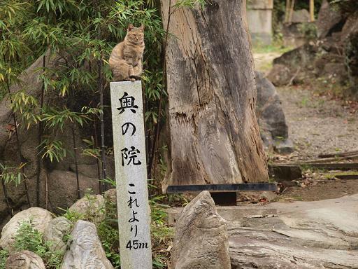 奥の院のネコ.JPG