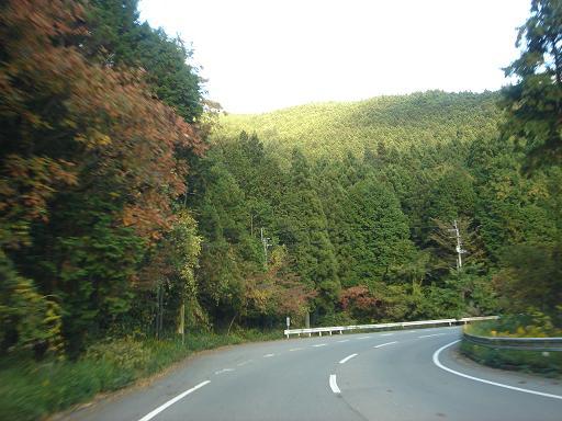 杉と紅葉.JPG