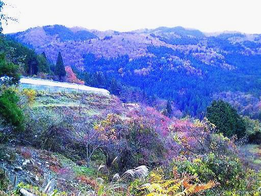 高原の紅葉とハウス.JPG