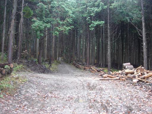 森の奥へと続く道.JPG