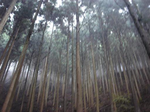 鬱蒼とした林.JPG