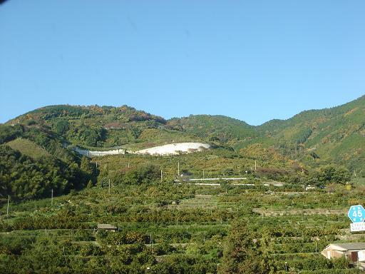 山全体みかん畑.JPG