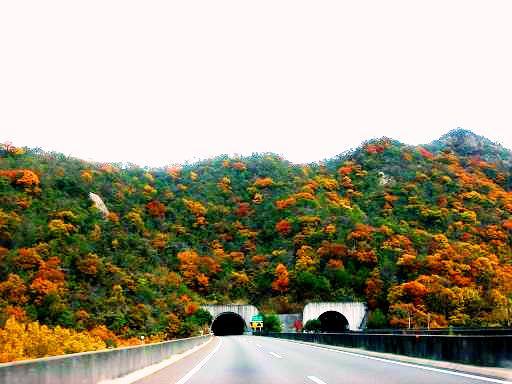 山陽道岡山辺りの紅葉.JPG