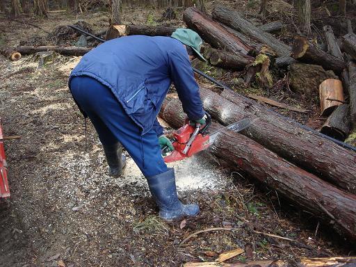 間伐材を切断.JPG