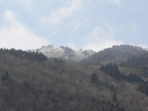 今日も霧氷.JPG