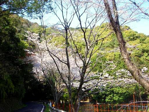 桜坂.JPG