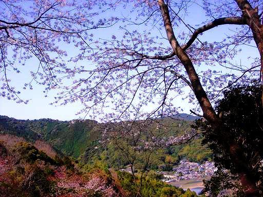 丘の上の桜.JPG