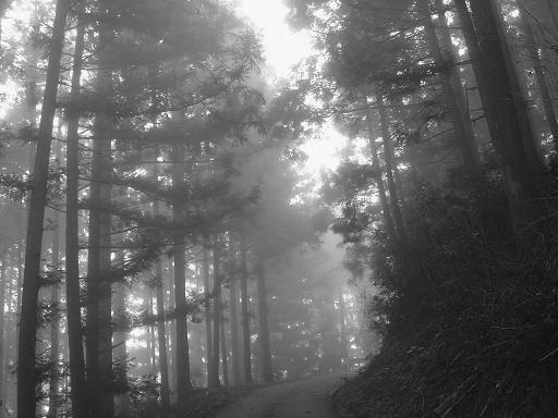 霧が深い.JPG