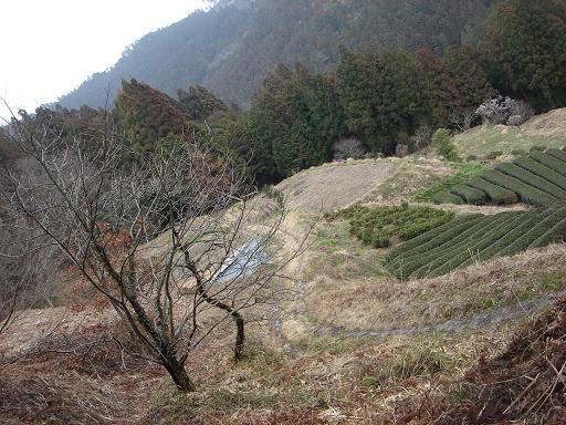 雰囲気の良い里山.JPG