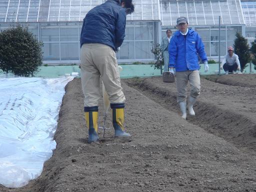 土壌へ注射.JPG