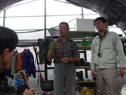 香美市のにら農家板橋さん.JPG