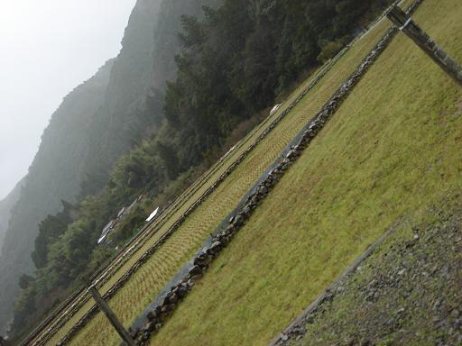 岩の棚田.JPG
