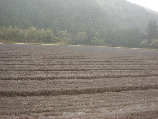 大雨の畑.JPG