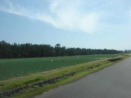 市民農園はラッキョウ畑に.JPG