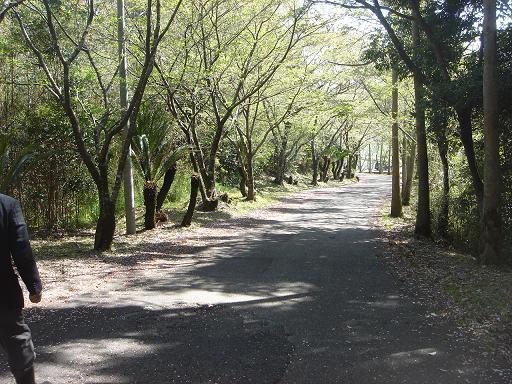 ゴルフ場への坂道.JPG