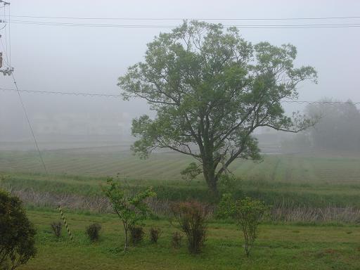 今朝霧が.JPG