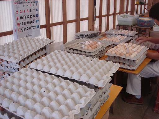 土佐ジローの卵.JPG