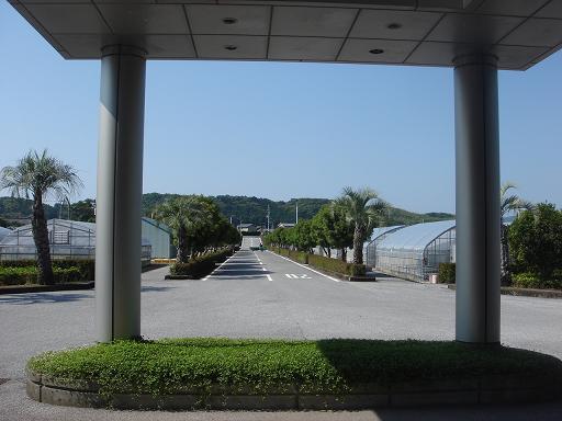南国リゾート風.JPG