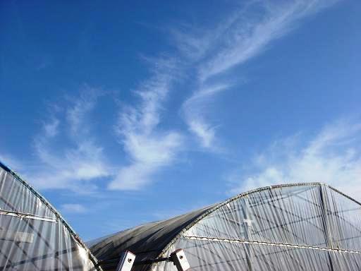 青い空と流れる雲.JPG