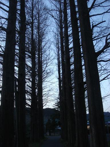 夕方の散歩.JPG
