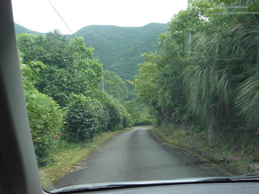 亜熱帯の山.JPG