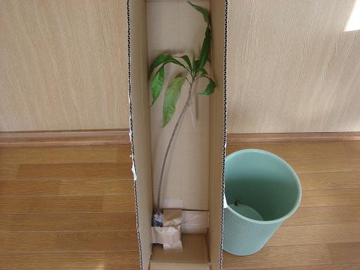 カニステルとゴミ箱.JPG