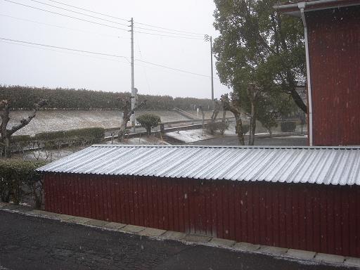 朝から雪.JPG