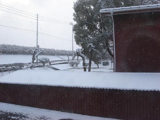 今日も雪.JPG
