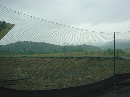 雨の農場.JPG
