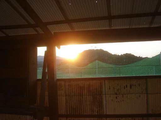 鶏舎からの夕日.JPG
