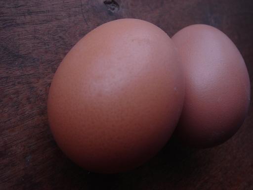 いい卵だねぇ.JPG