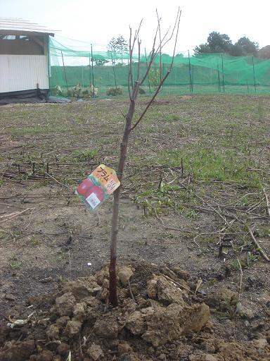 植樹3.JPG