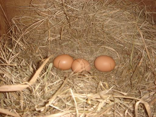 産卵箱の中.JPG
