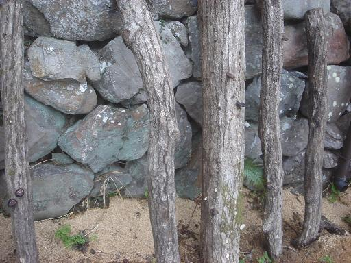 椎茸の原木.JPG