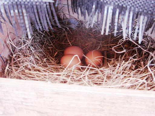 産卵箱の卵.JPG