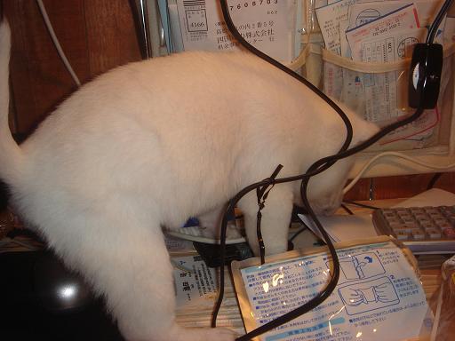 ま、マウスパッドの上に!.JPG