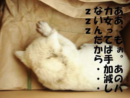 疲れた・・・・.JPG