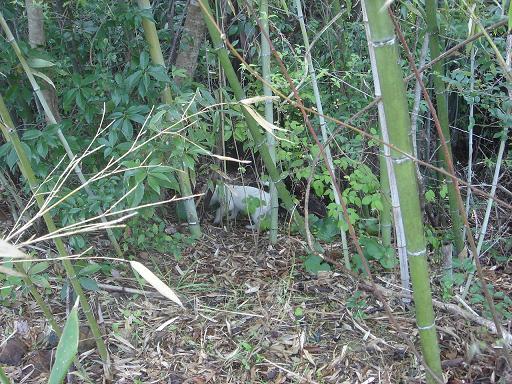 竹藪を散策.JPG