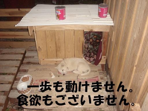 熟睡.JPG