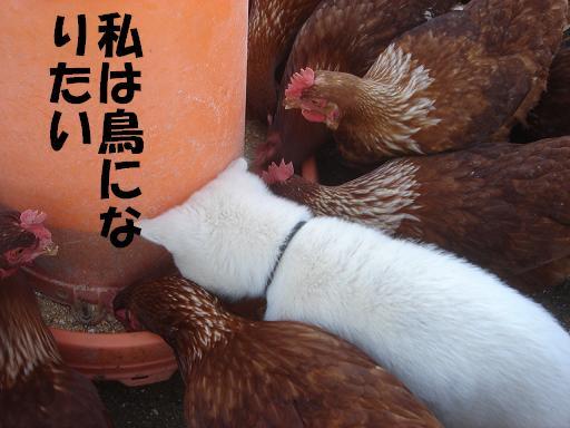 鶏よ.JPG