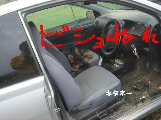 車に・・・.JPG