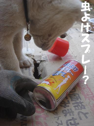 虫よけスプレーとな?.JPG