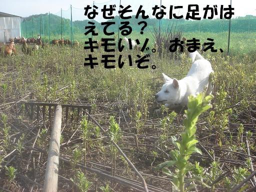 レーキと喧嘩.JPG