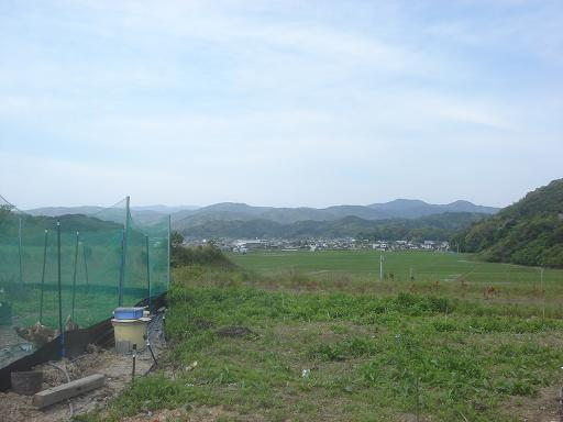 草だらけの畑.JPG